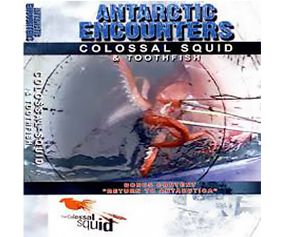 Antarctic-Encounters-DVD-–-Colossal-Squid-Toothfish-edit